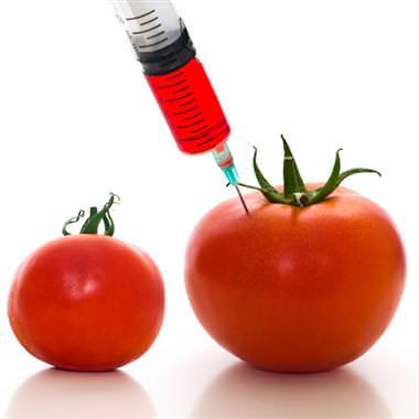 alimentos-transgenicos