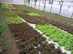 ap_agricultura