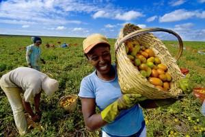 brasil-agricultura