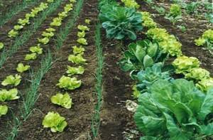 Alimentos orgánicos vs Tradicionales